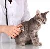 Ветеринарные клиники в Протвино